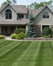 home-lawn